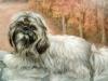 littledog